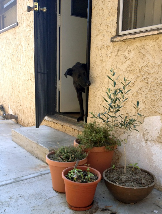 dog smelling the herbs