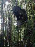 tyrannosaurus rex statue
