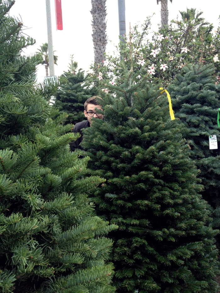 hide and go seek in christmas trees