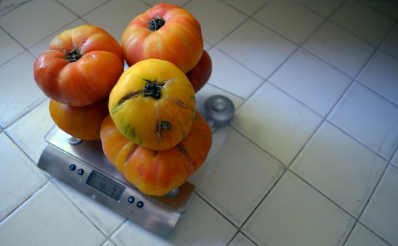 pounds of tomatoes