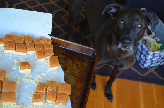 dog and candy