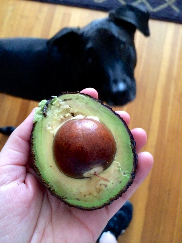 Gibson dog with front yard avocado